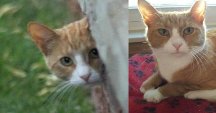 gatto-bianco-e-arancione