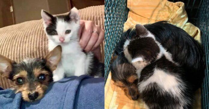 gattino-con-cagnolino