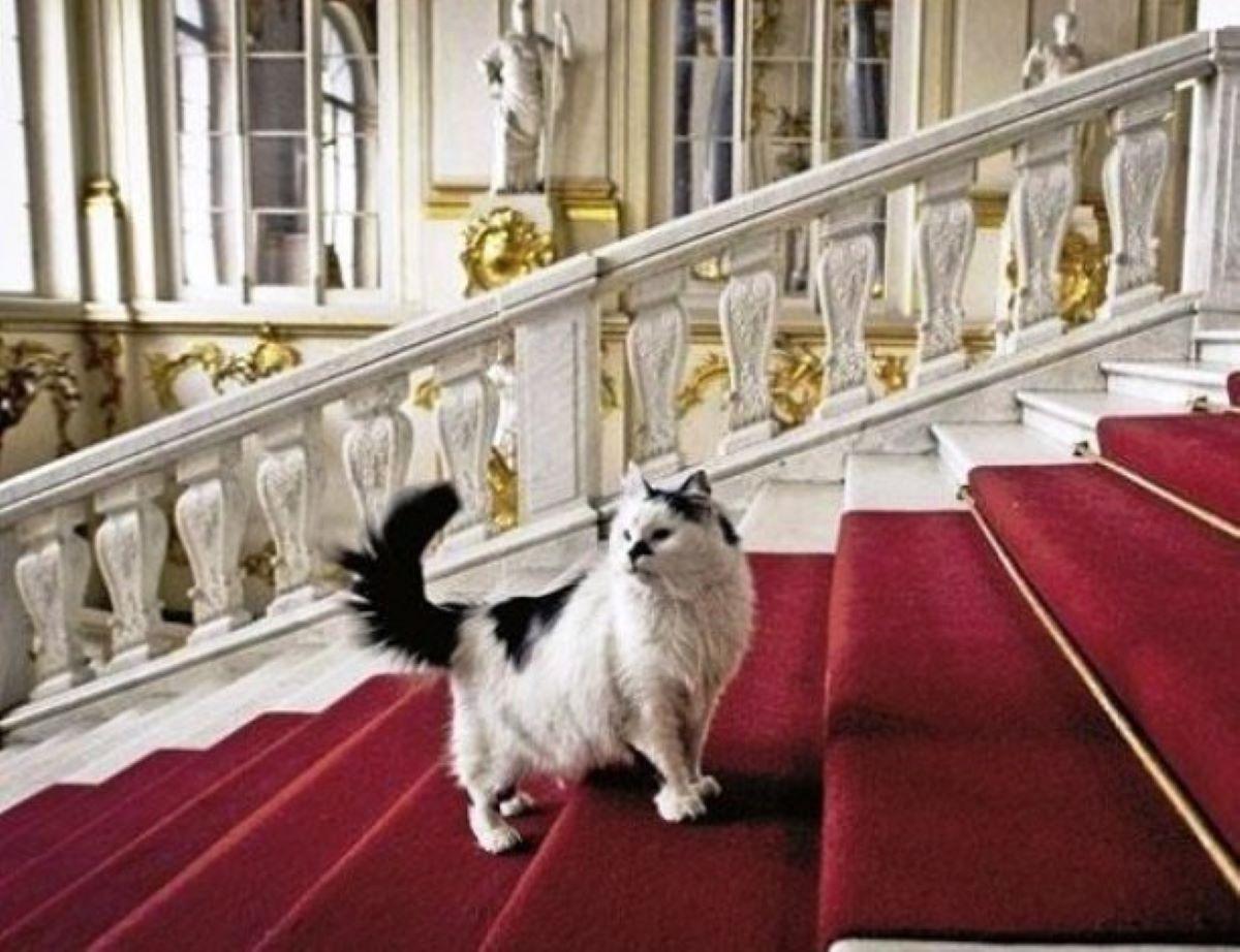 gatto-su-scalinata