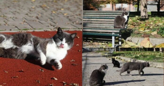 gatti-all'aria-aperta