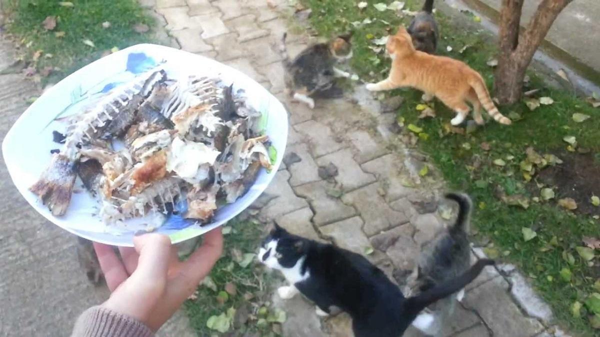 pesce con lische servito a dei gatti
