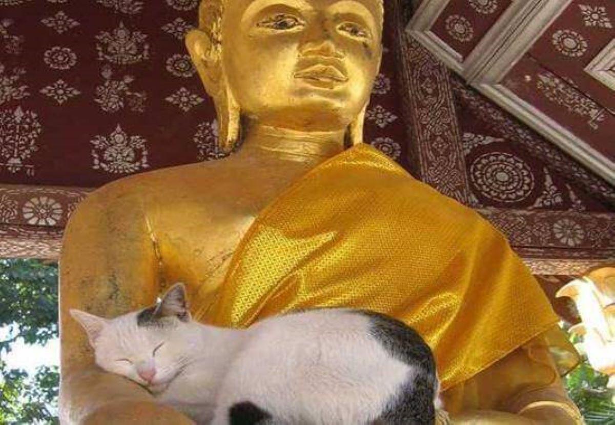 gatto-che-dorme-su-statua-in-oro