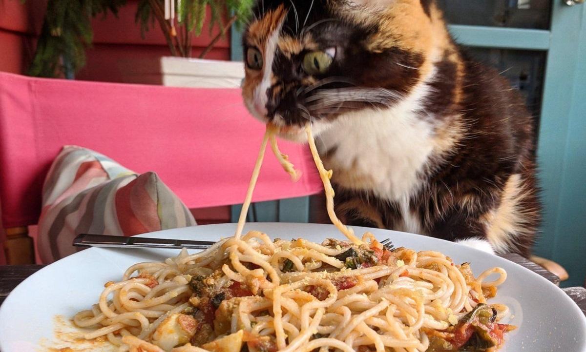 gatto mangia spaghetti