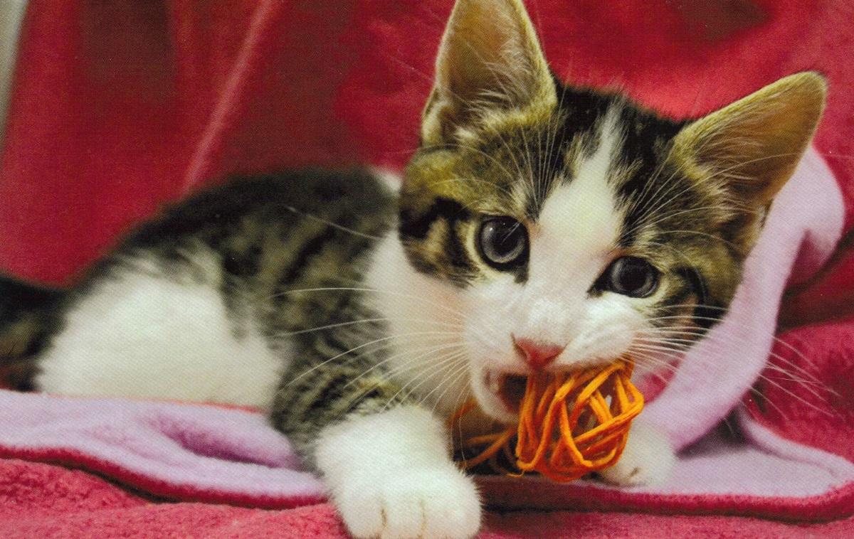 gattino con pasta tra i denti