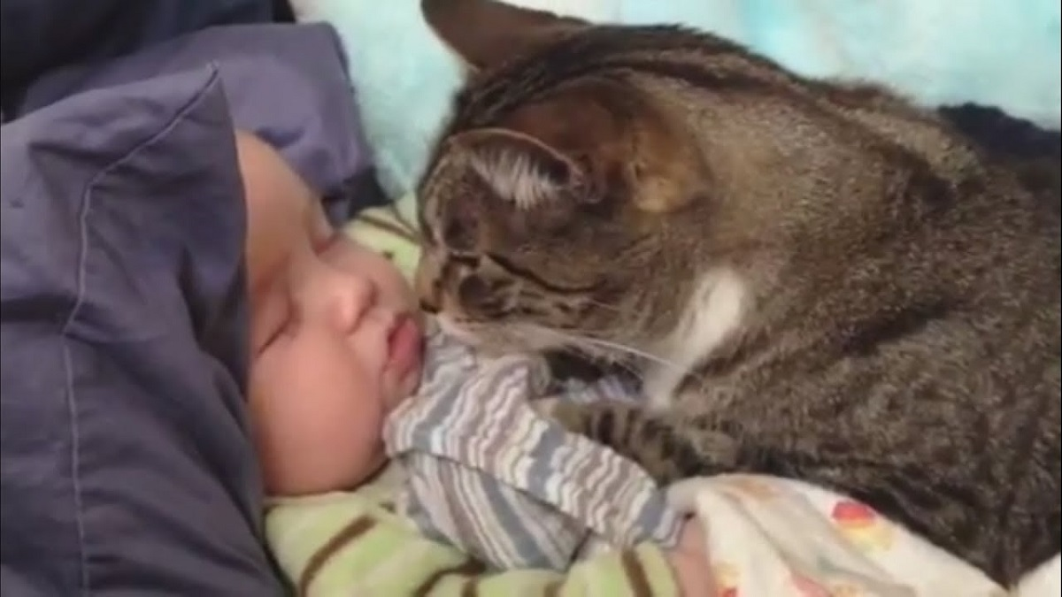 gatto con bambino piccolo