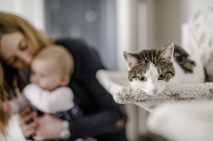 gatto con mamma e bambino sullo sfondo