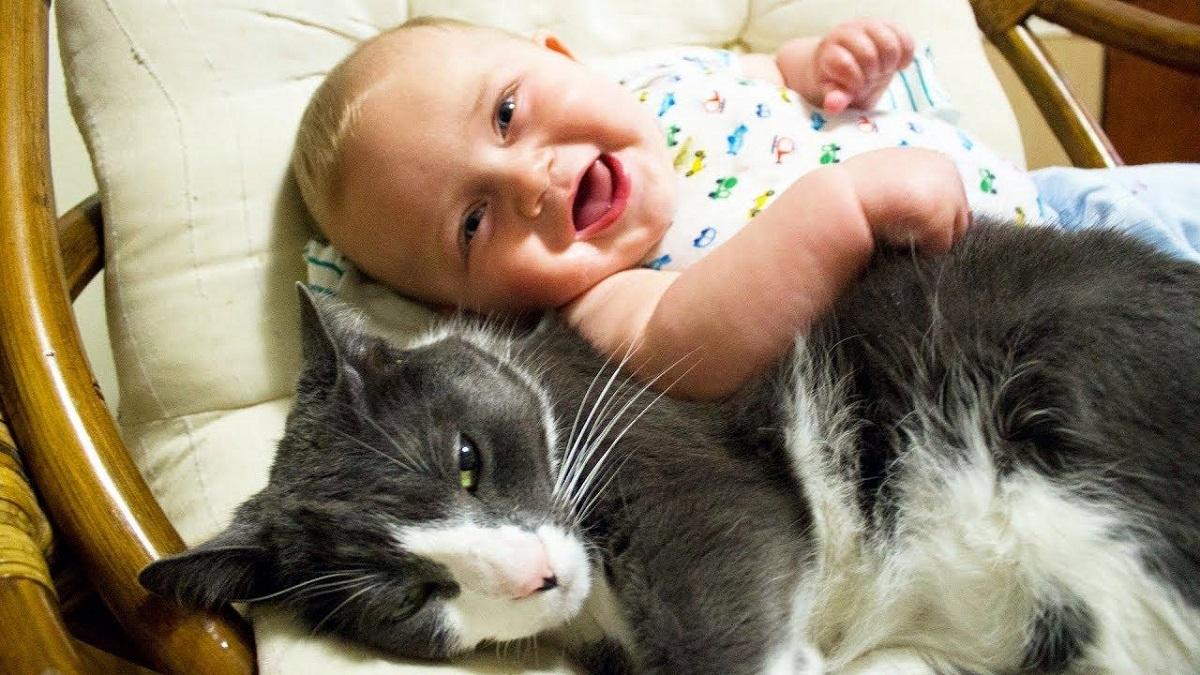 bambino accanto a gatto