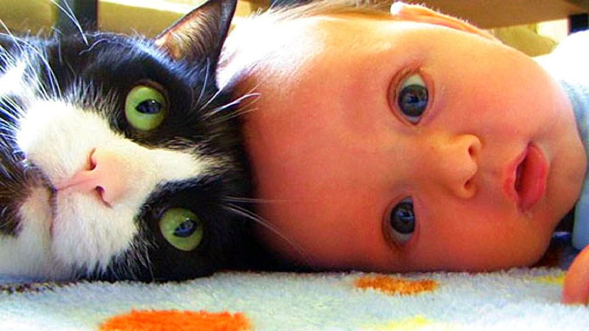 gatto con neonato