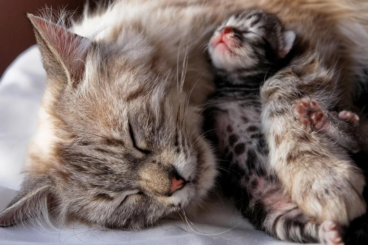 gatta e gattino che dormono