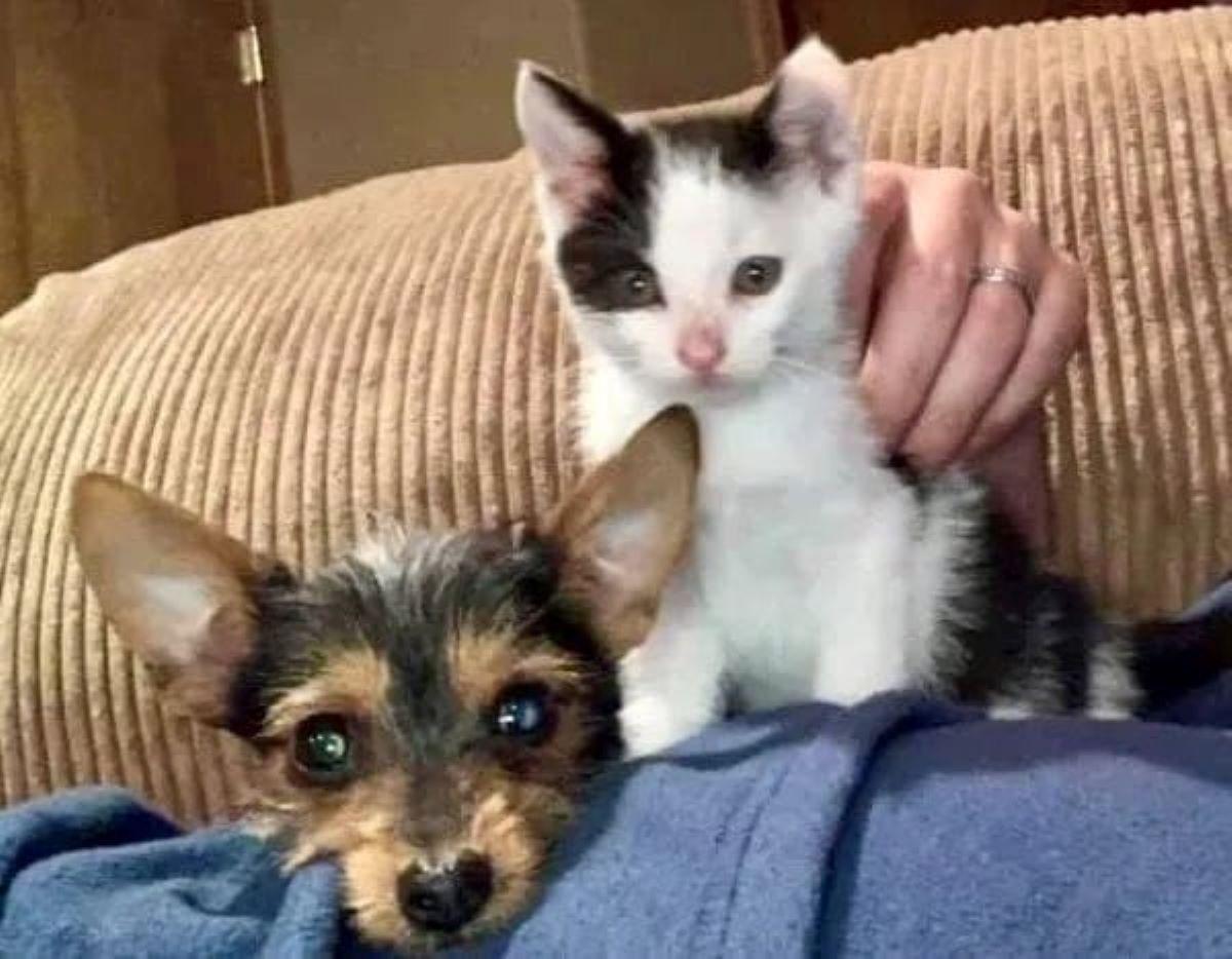 gattino-e-cagnolino-su-divano