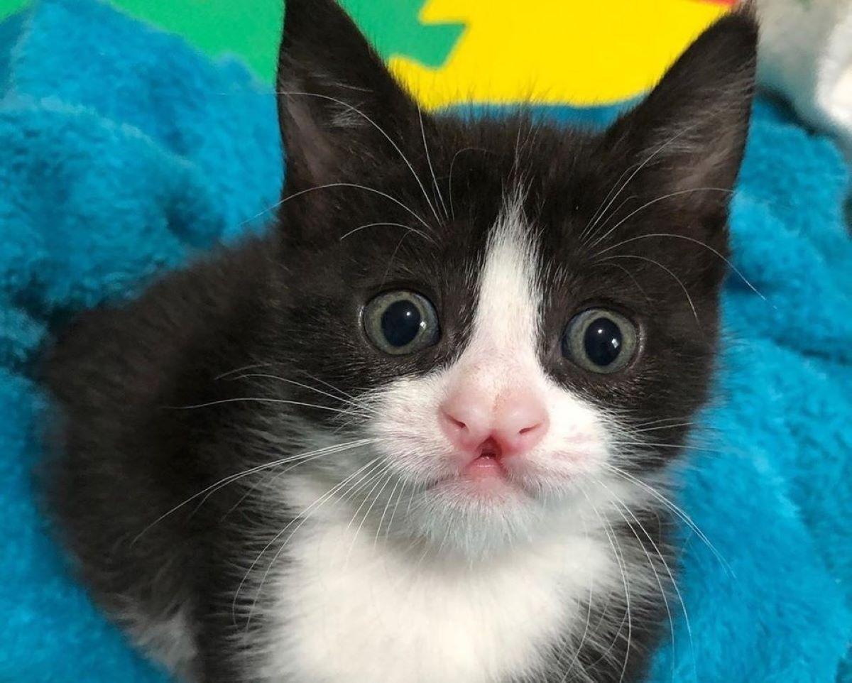 gattino-con-musetto-strano