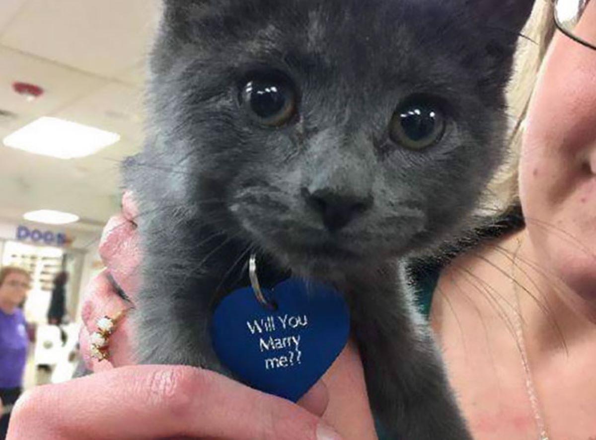 Gatto-con-cuore-blu