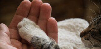 gatto con zampa su mano del padrone