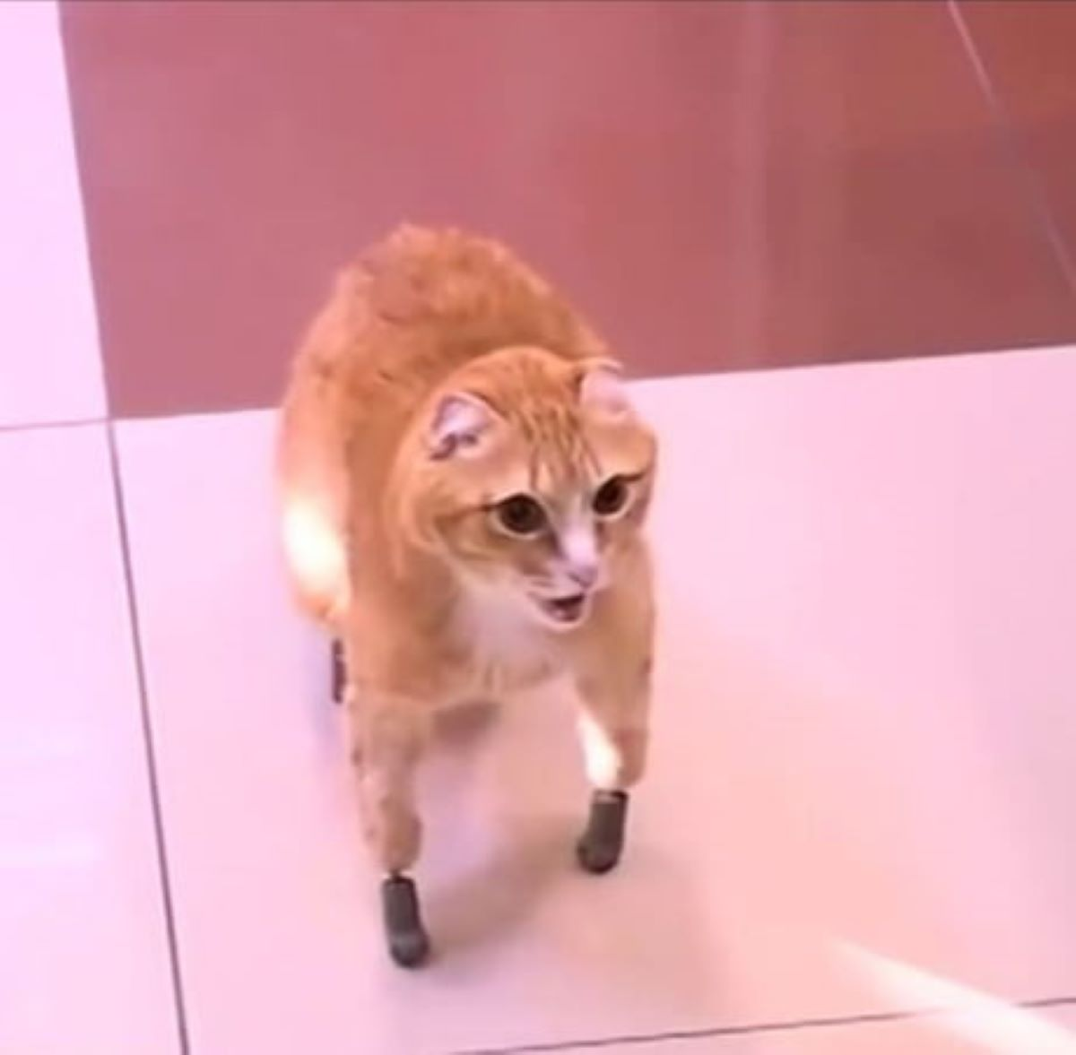 gatto-con-zampe-bioniche