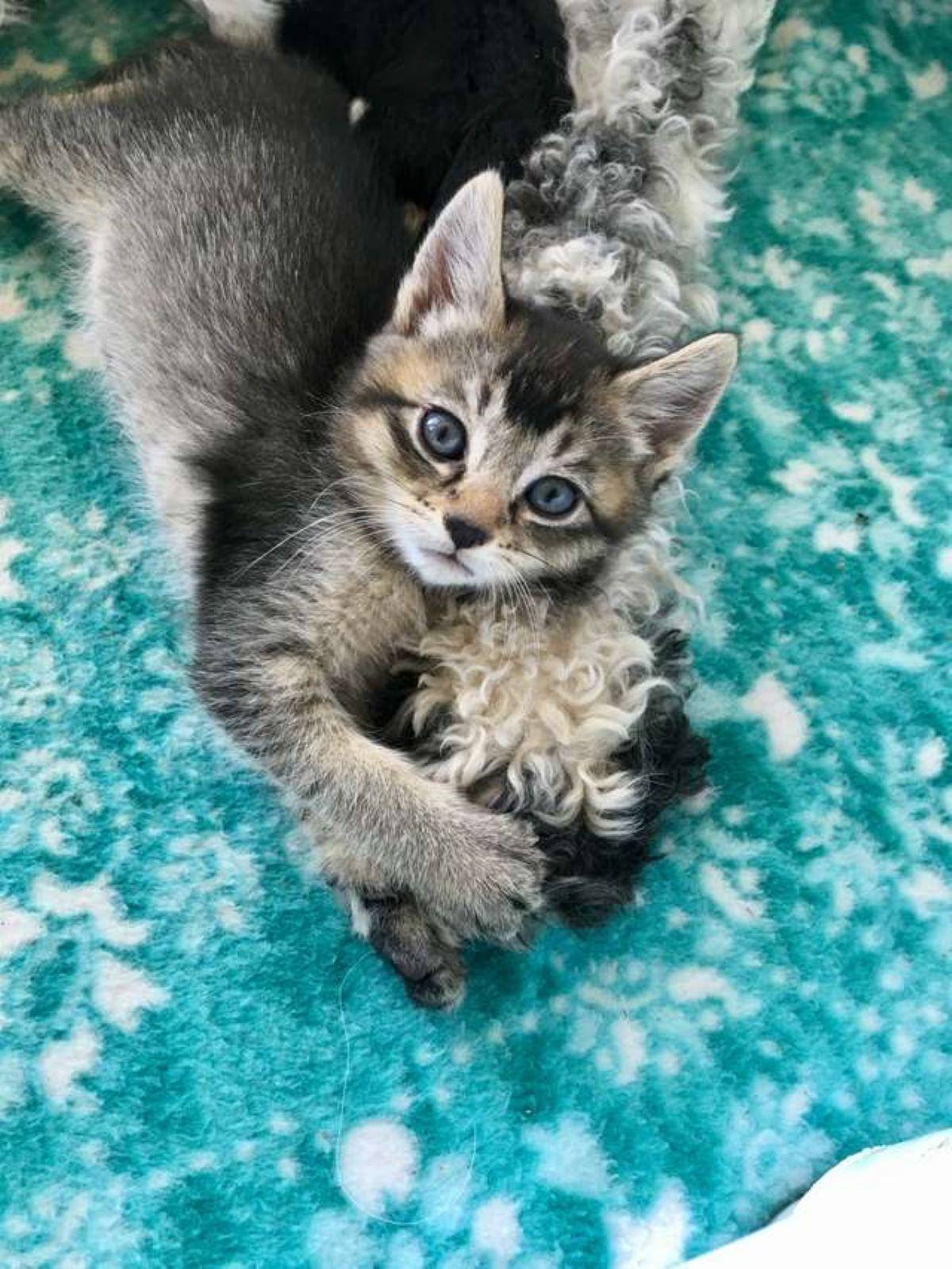 gattino-con-zampa-di-cane