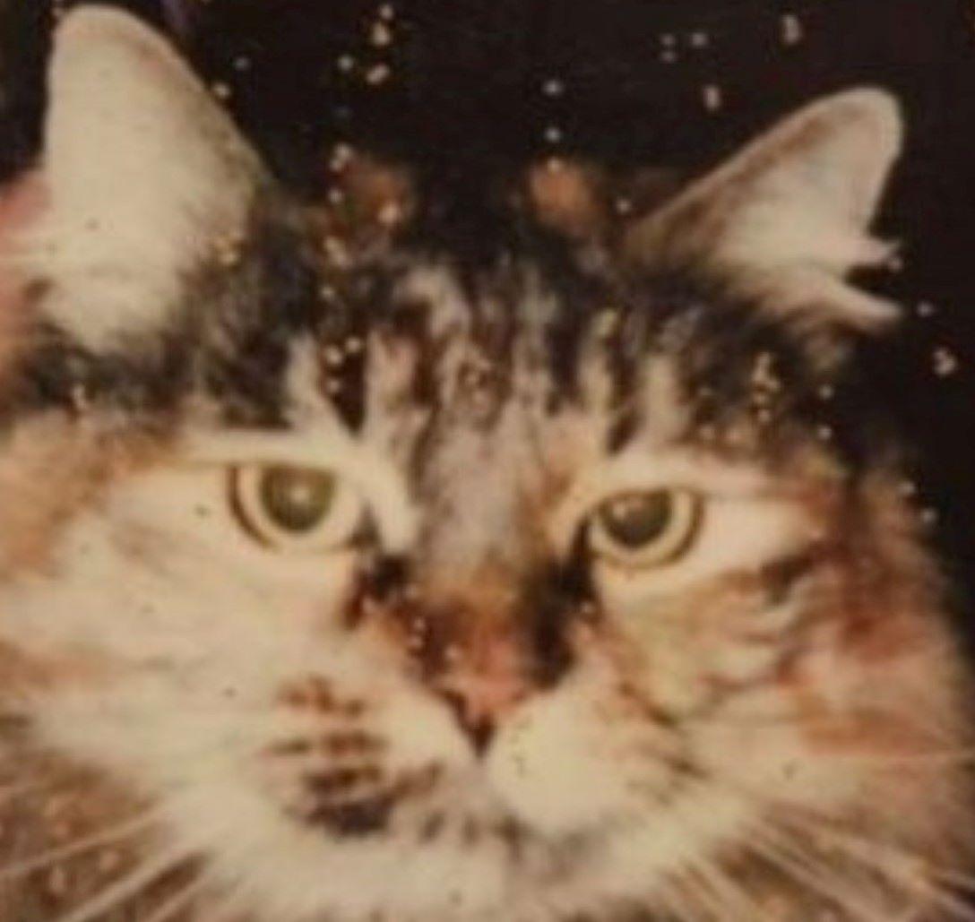 gatto-in-vecchia-foto