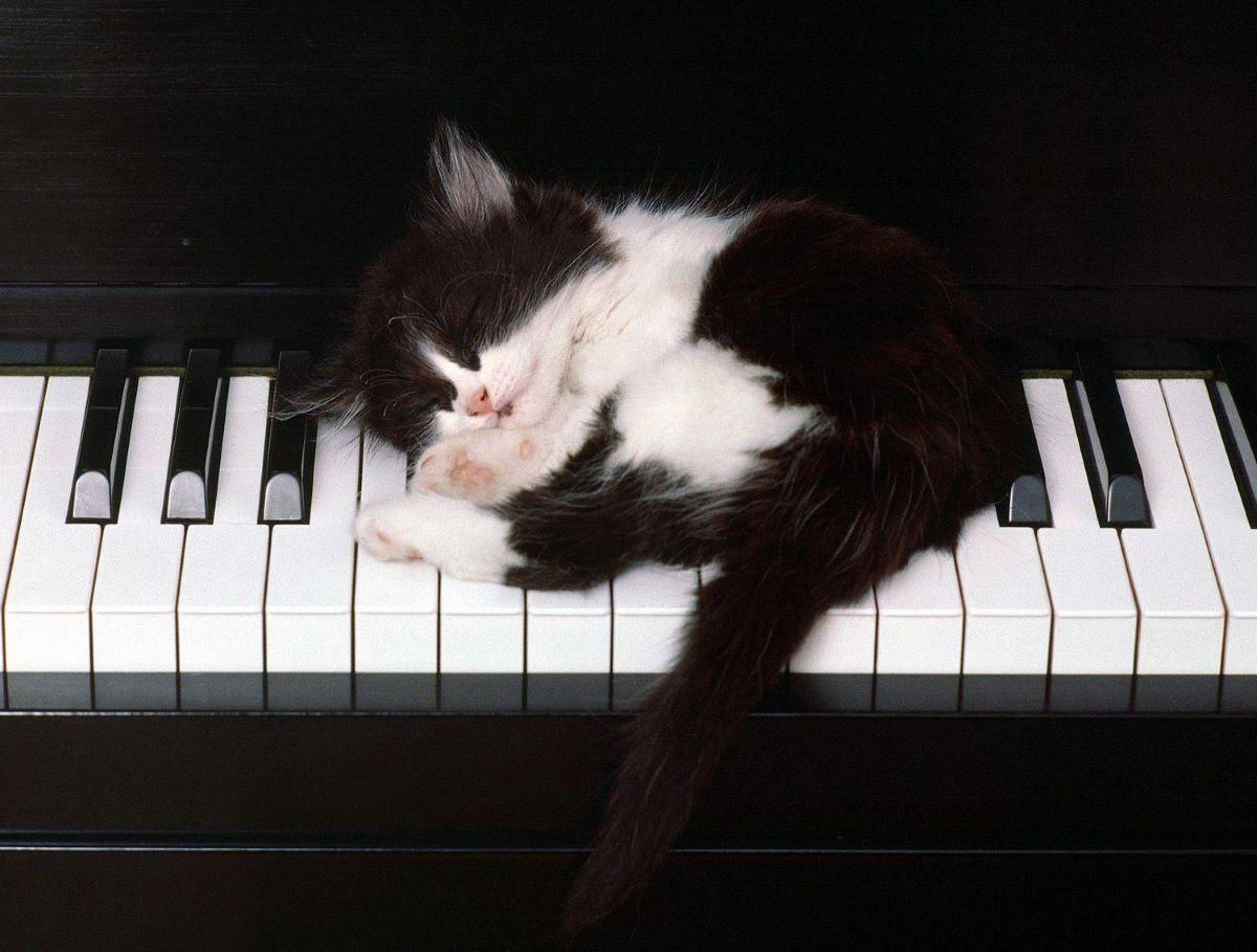 gattino-su-pianoforte