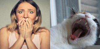 gatto-e-donna-spaventata