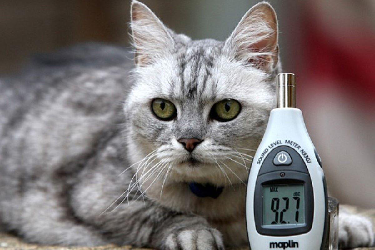 gatto-con-apparecchio-per-misurare-i-decibel