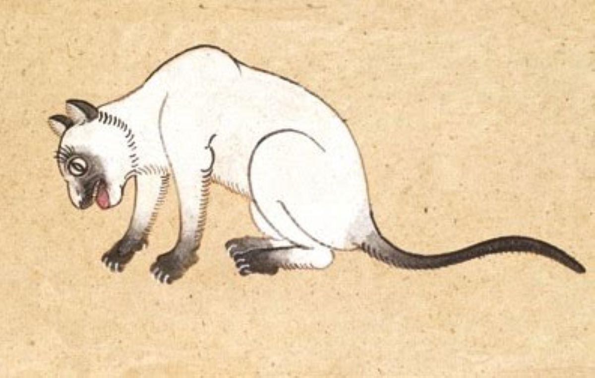 gatto-rappresentato-in-disegno
