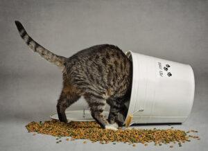 I croccantini fanno male ai gatti