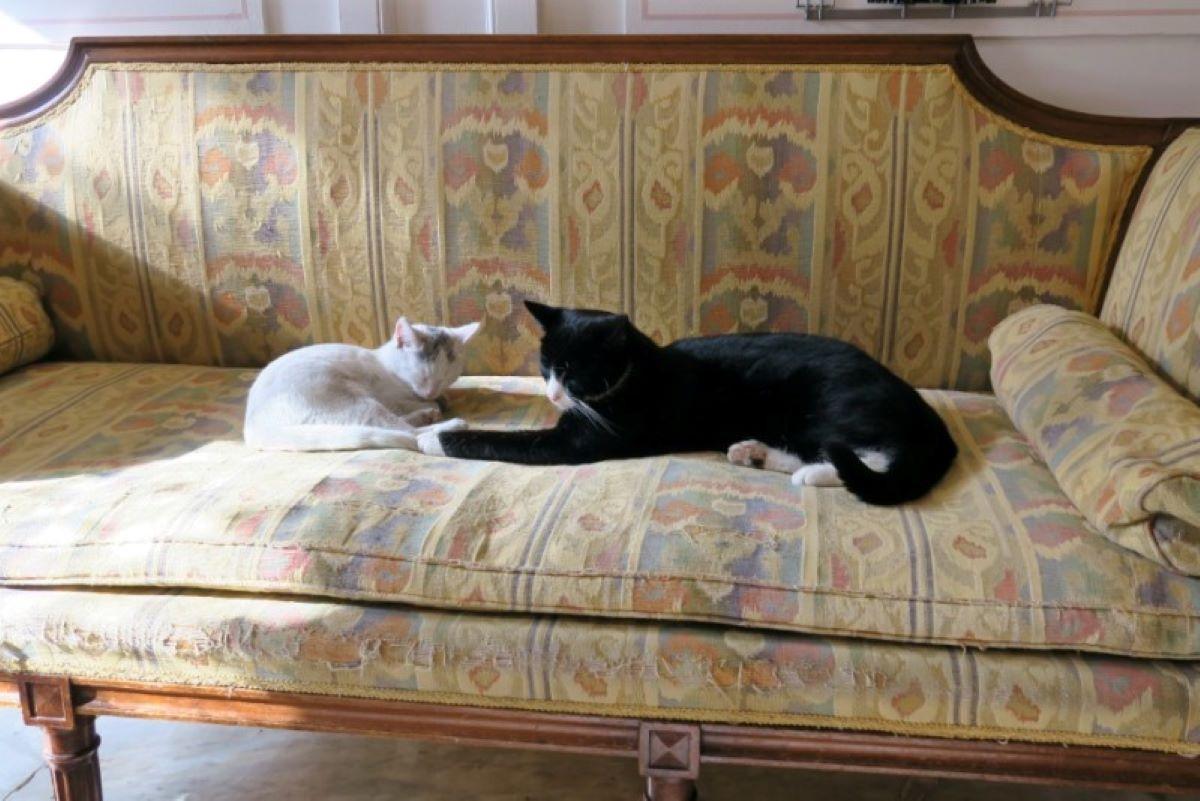 gatti-su-divano-antico
