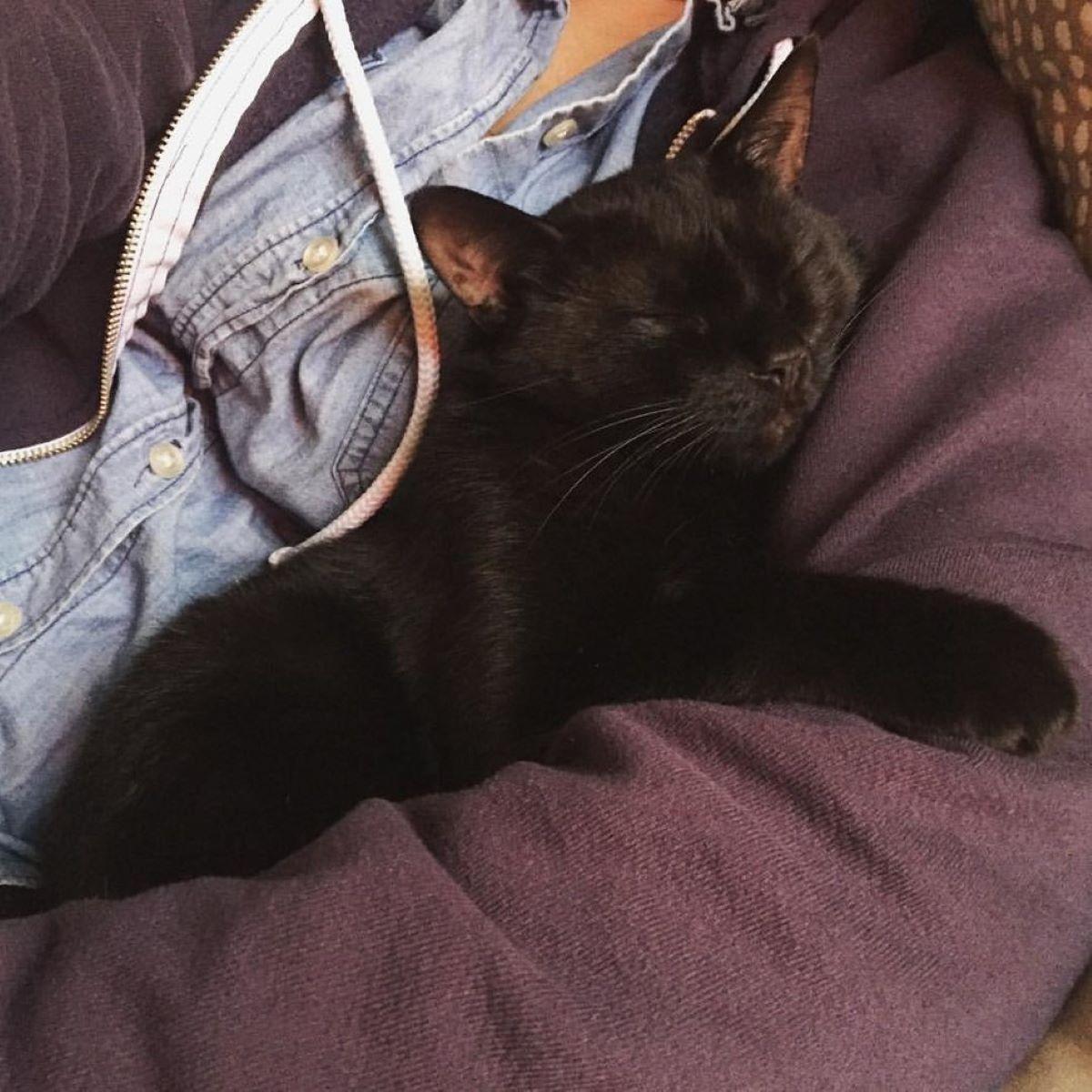 gatto-nero-che-dorme-accoccolato