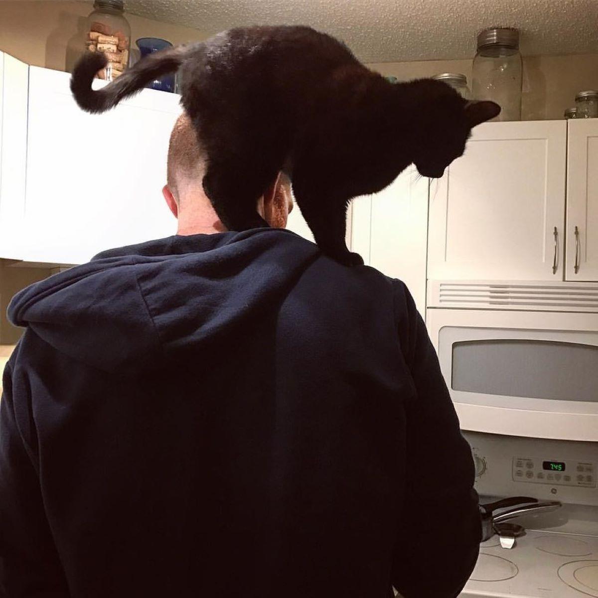 gatto-sopra-a-spalle