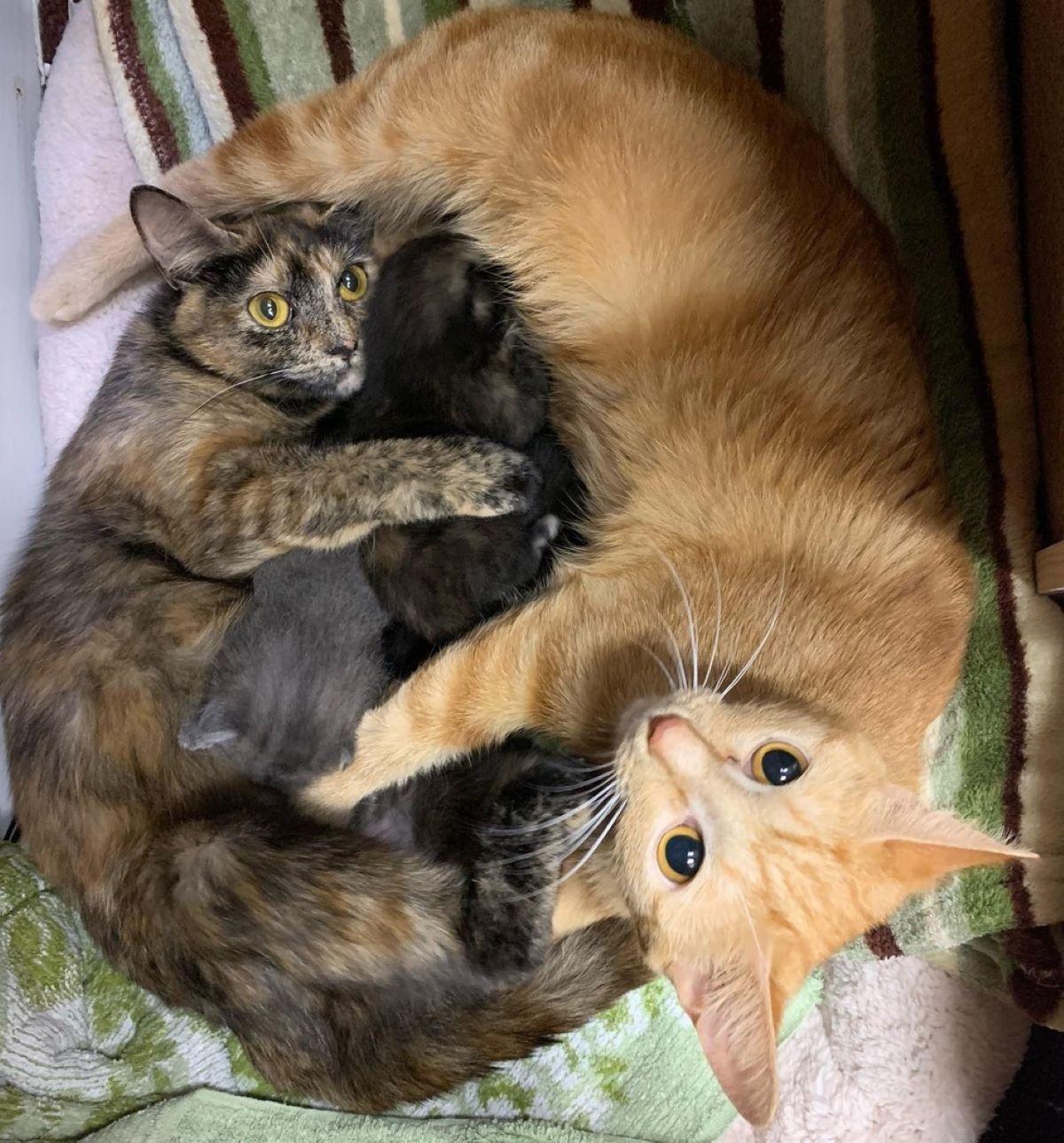 gatto-tigrato-e-gatto-arancione