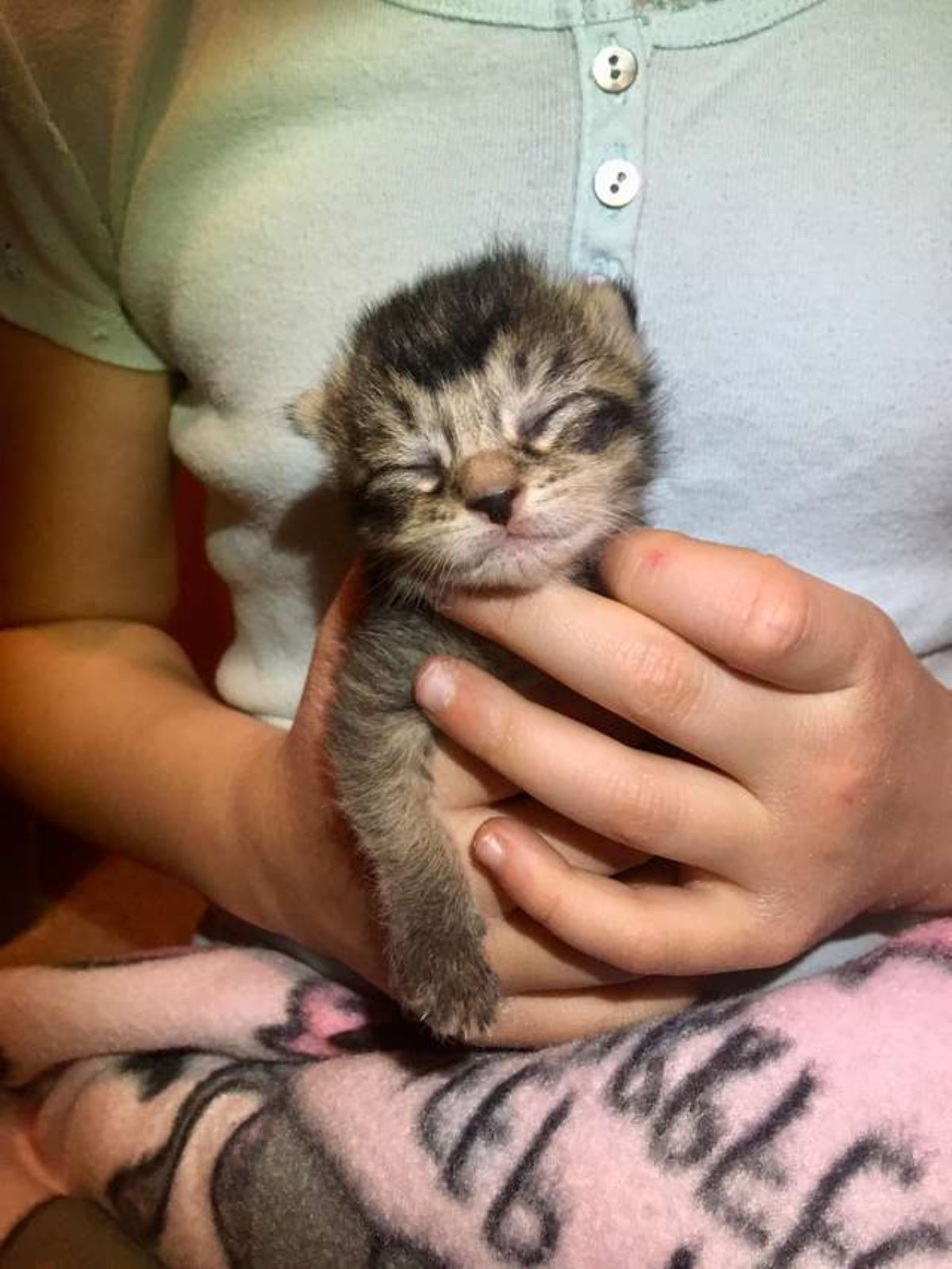 gattina-minuscola