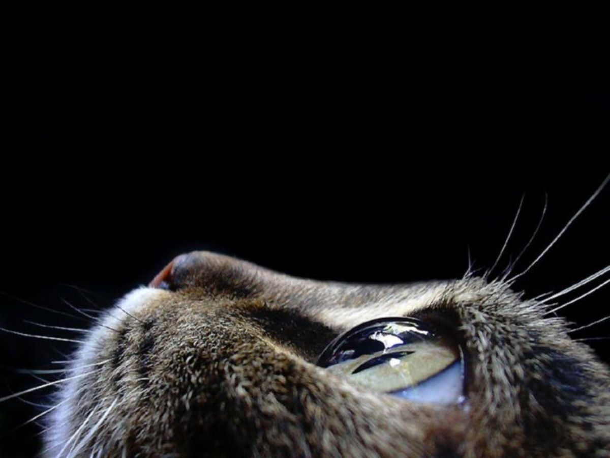 profilo-di-gatto