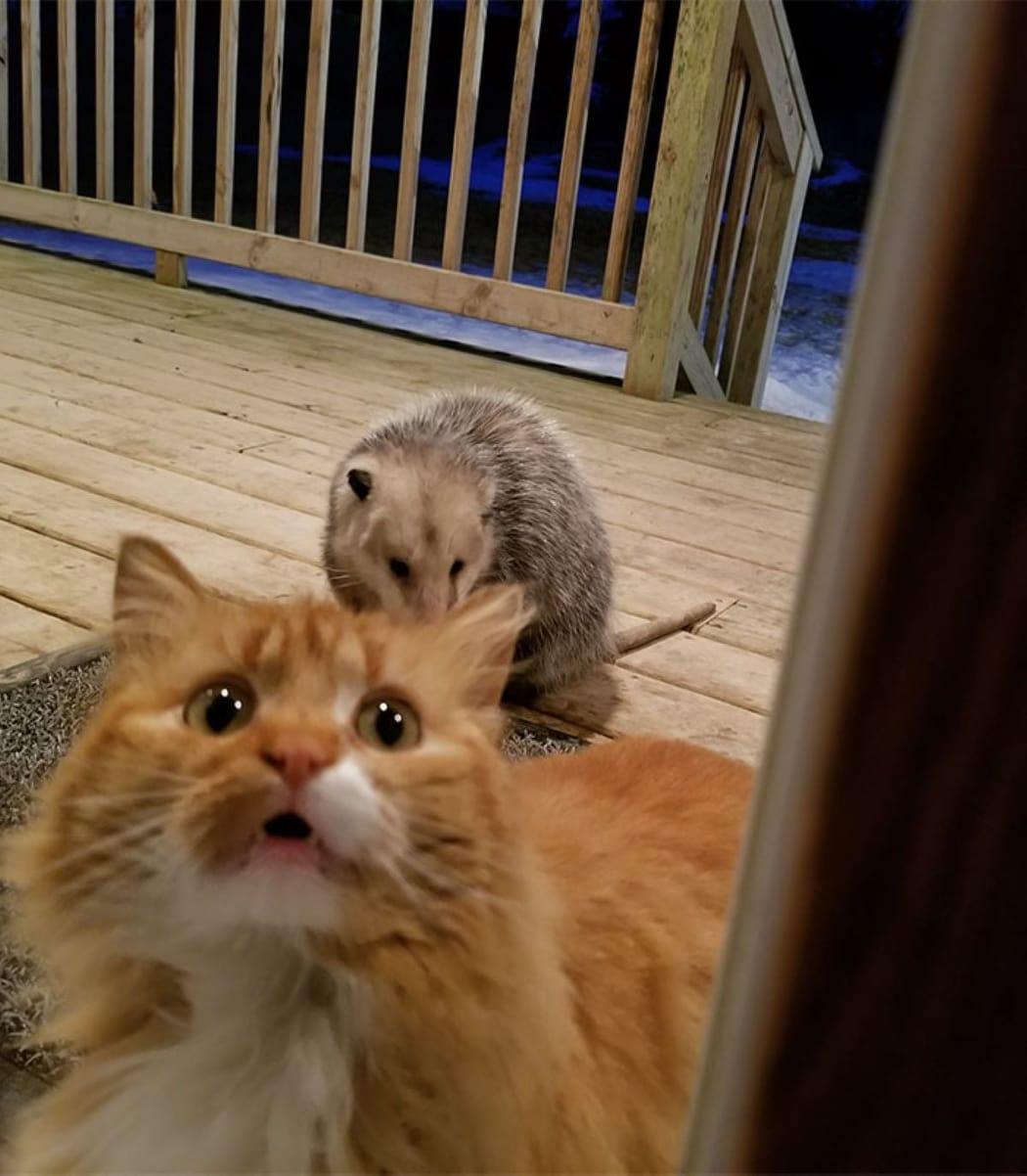 gatto-con-sguardo-supplichevole