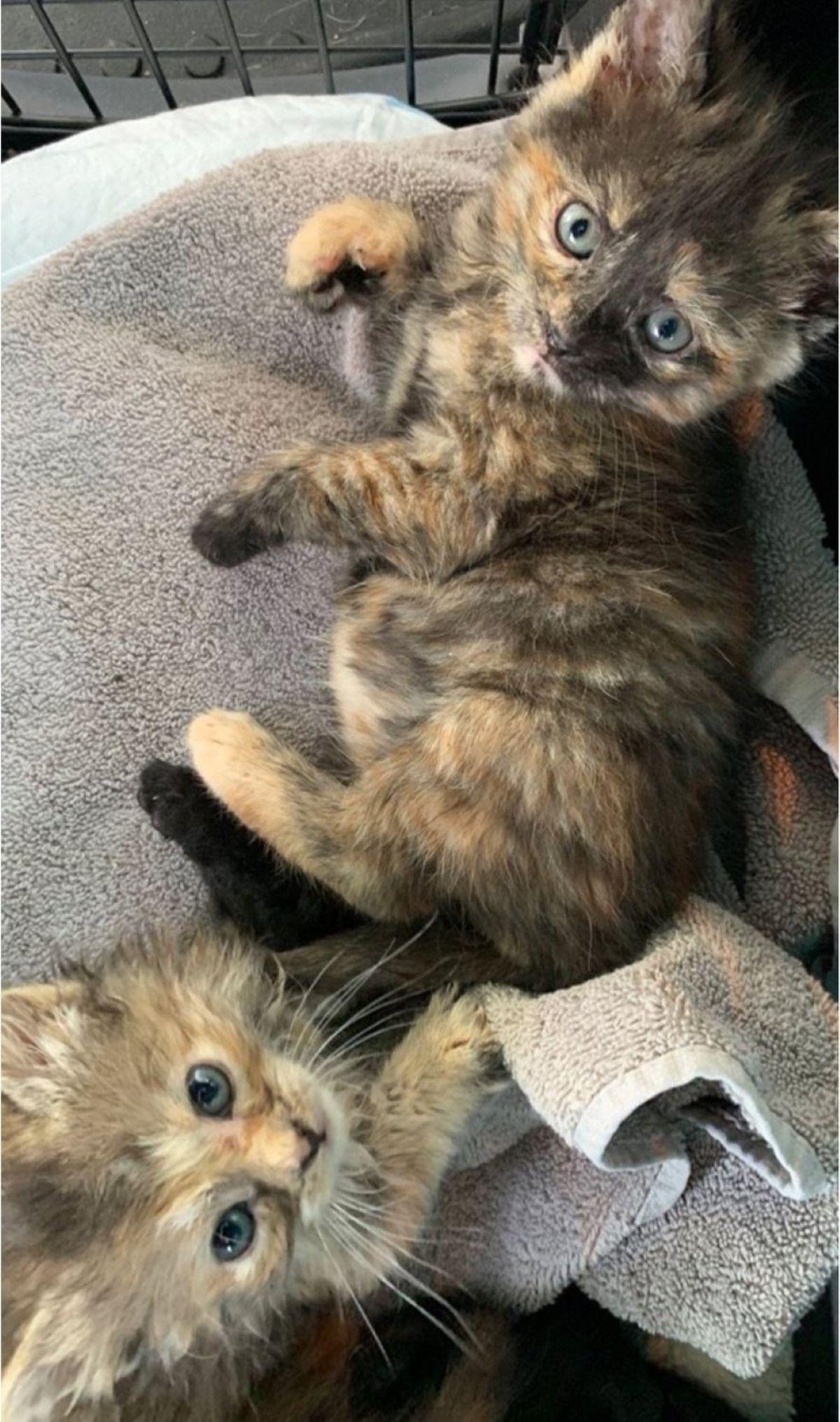 due-gattini-con-occhi-svegli