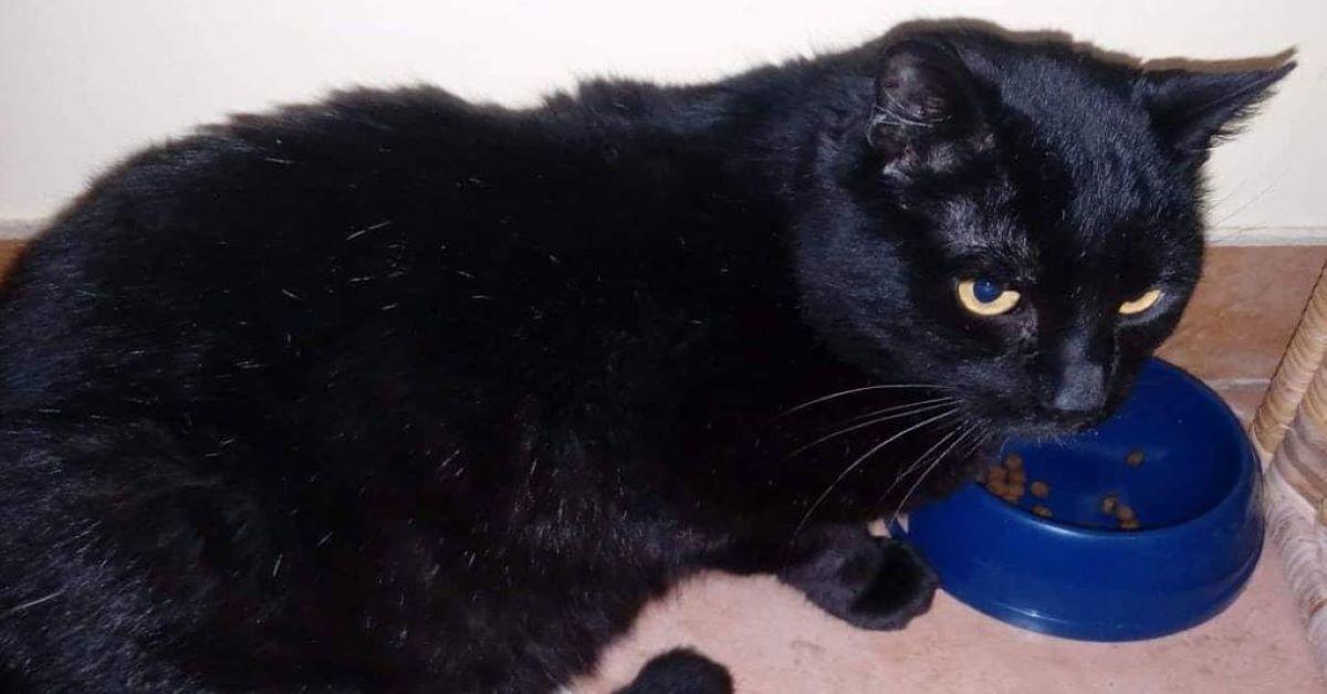 gatto-nero-e-ciotola