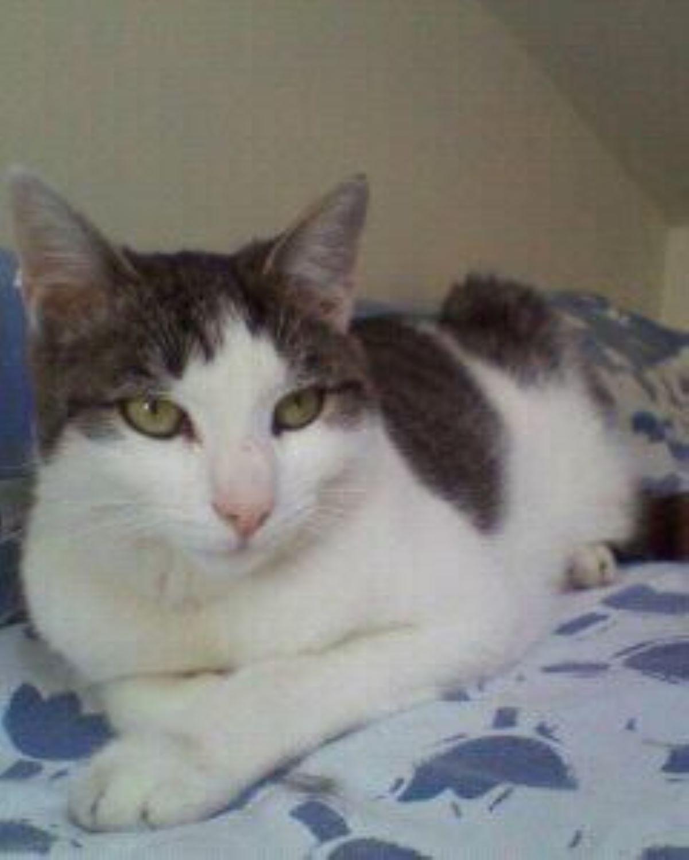 gatto-su-letto