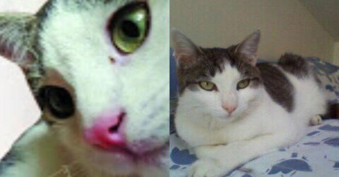 gatto-bianco-e-grigio