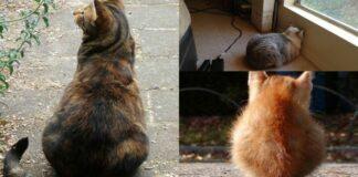 gatti-girati-di-spalle
