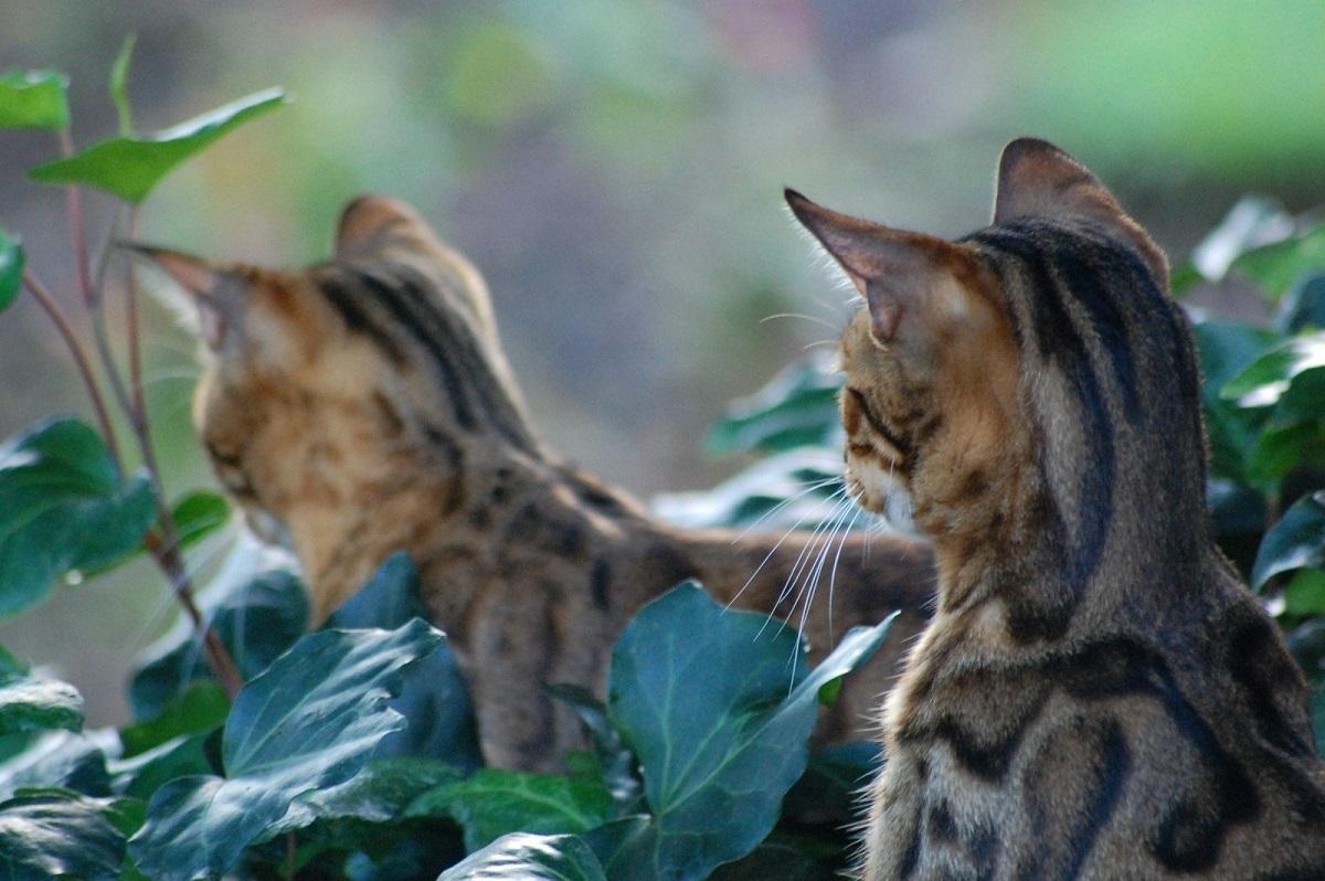 due gattini in giardino