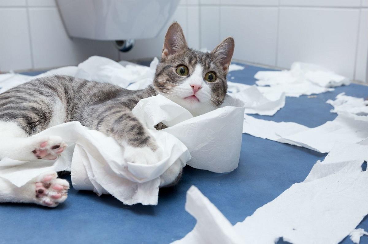 gatto in mezzo a carta igienica