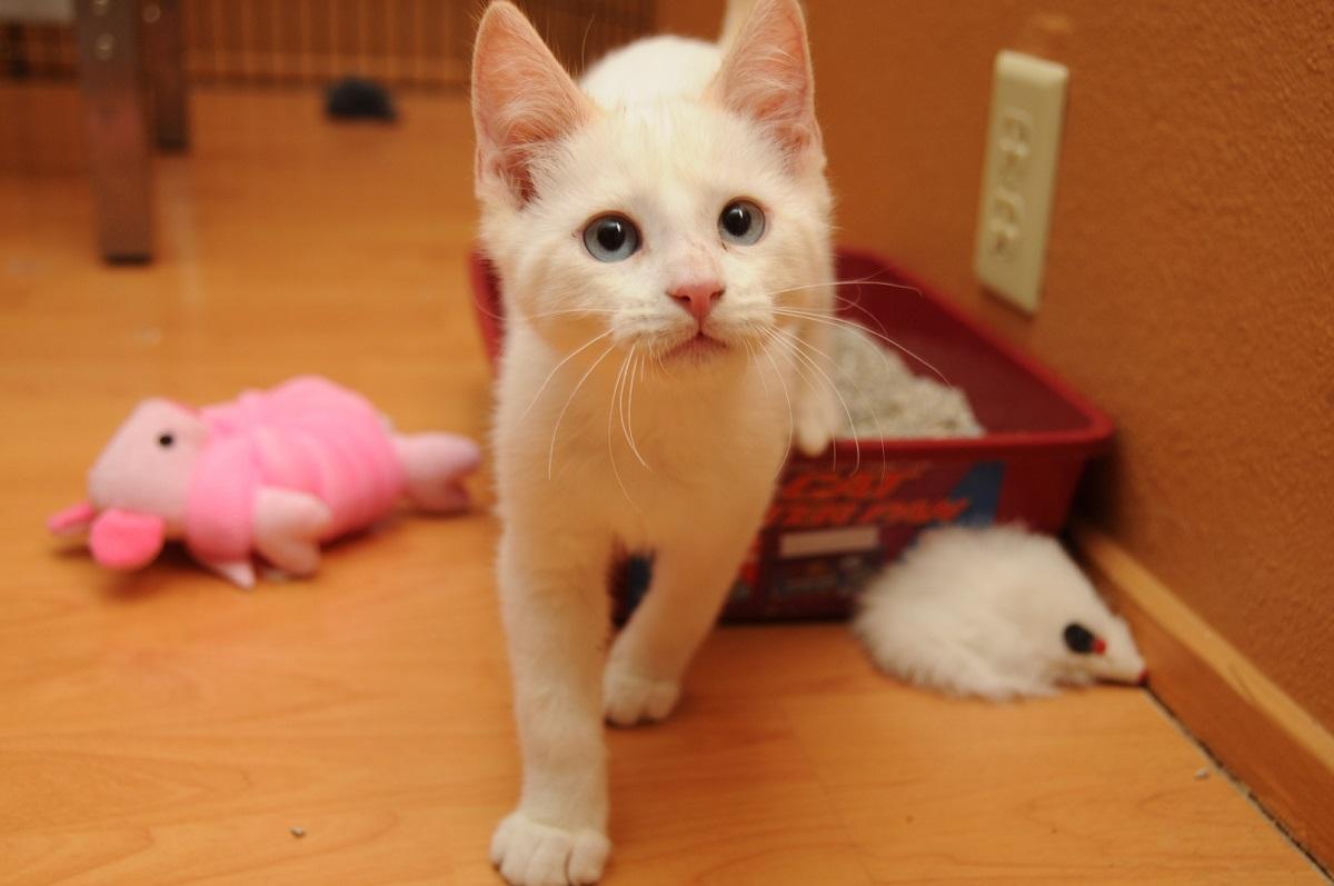 gatto esce da lettiera