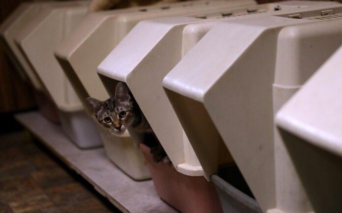 gatto dentro lettiera