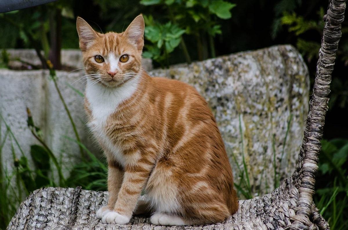 gatto su una pianta