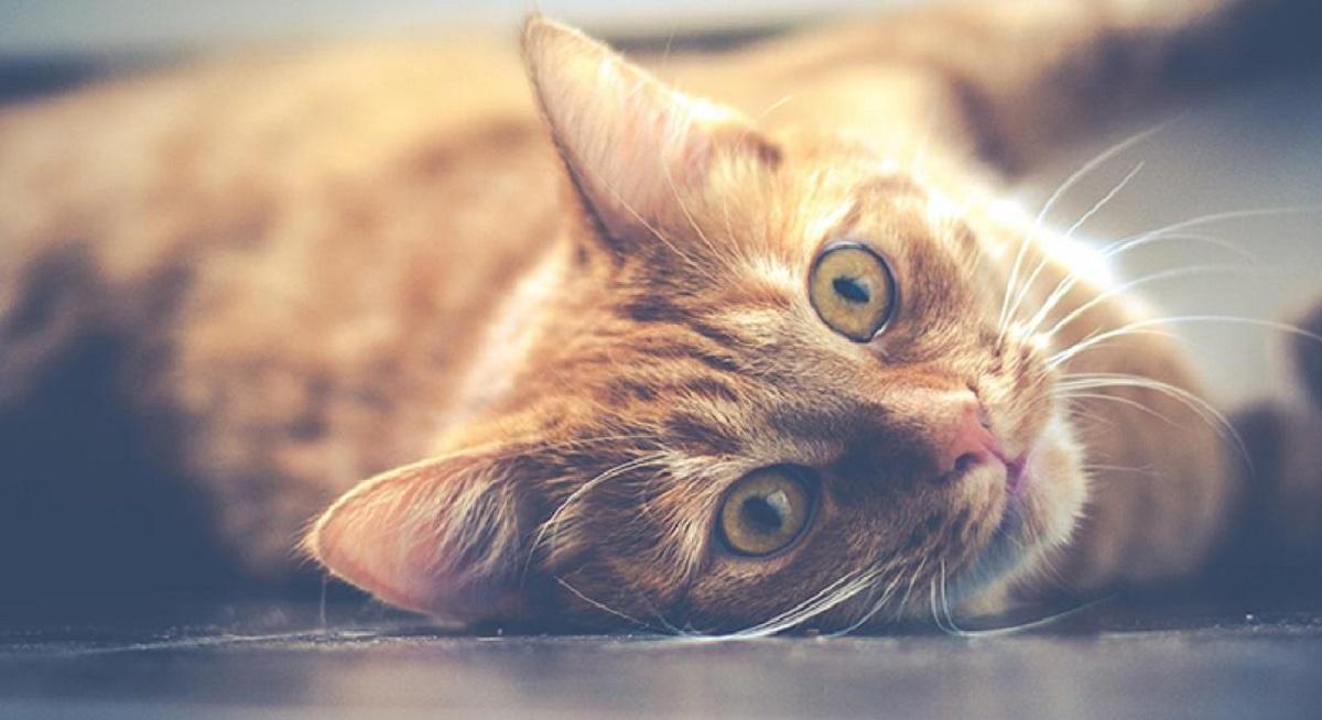 gatto arancione per terra