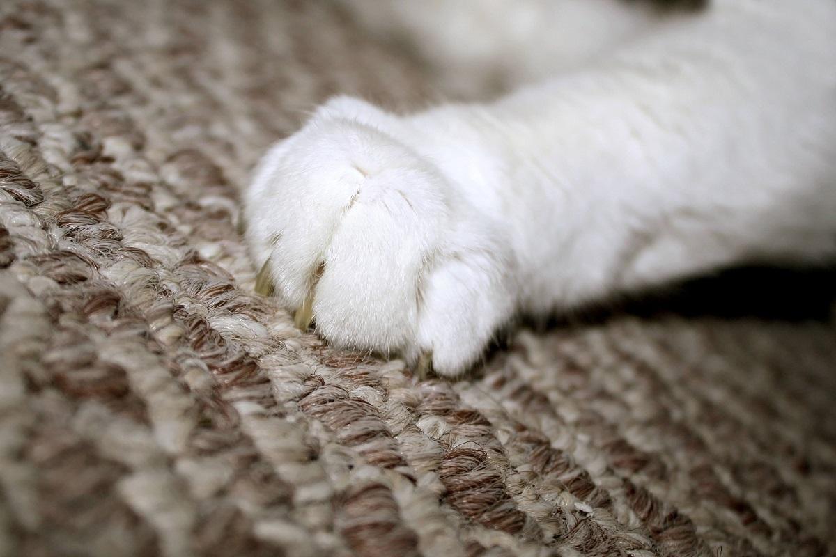 zampa di gatto