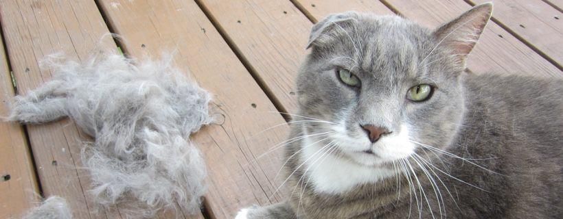 Quando un gatto vomita