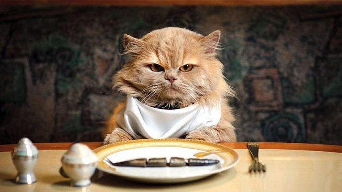 gatto a tavola con pesce