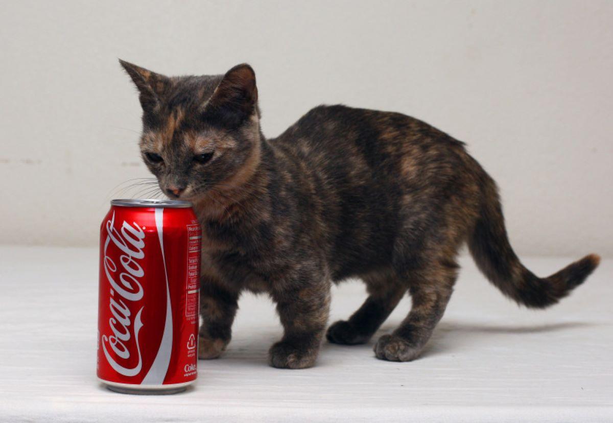 gatto-con-lattina