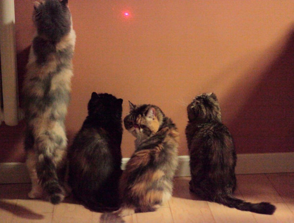 gatti-che-fissano-luce-su-muro