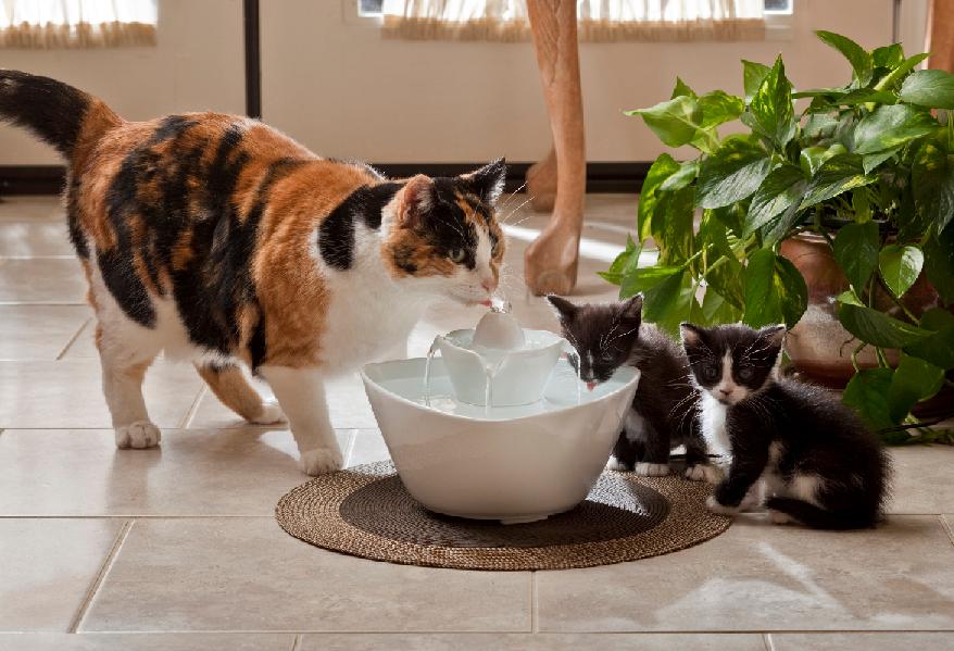 Quale acqua far bere al gatto