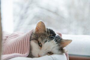 Raffreddore del gatto